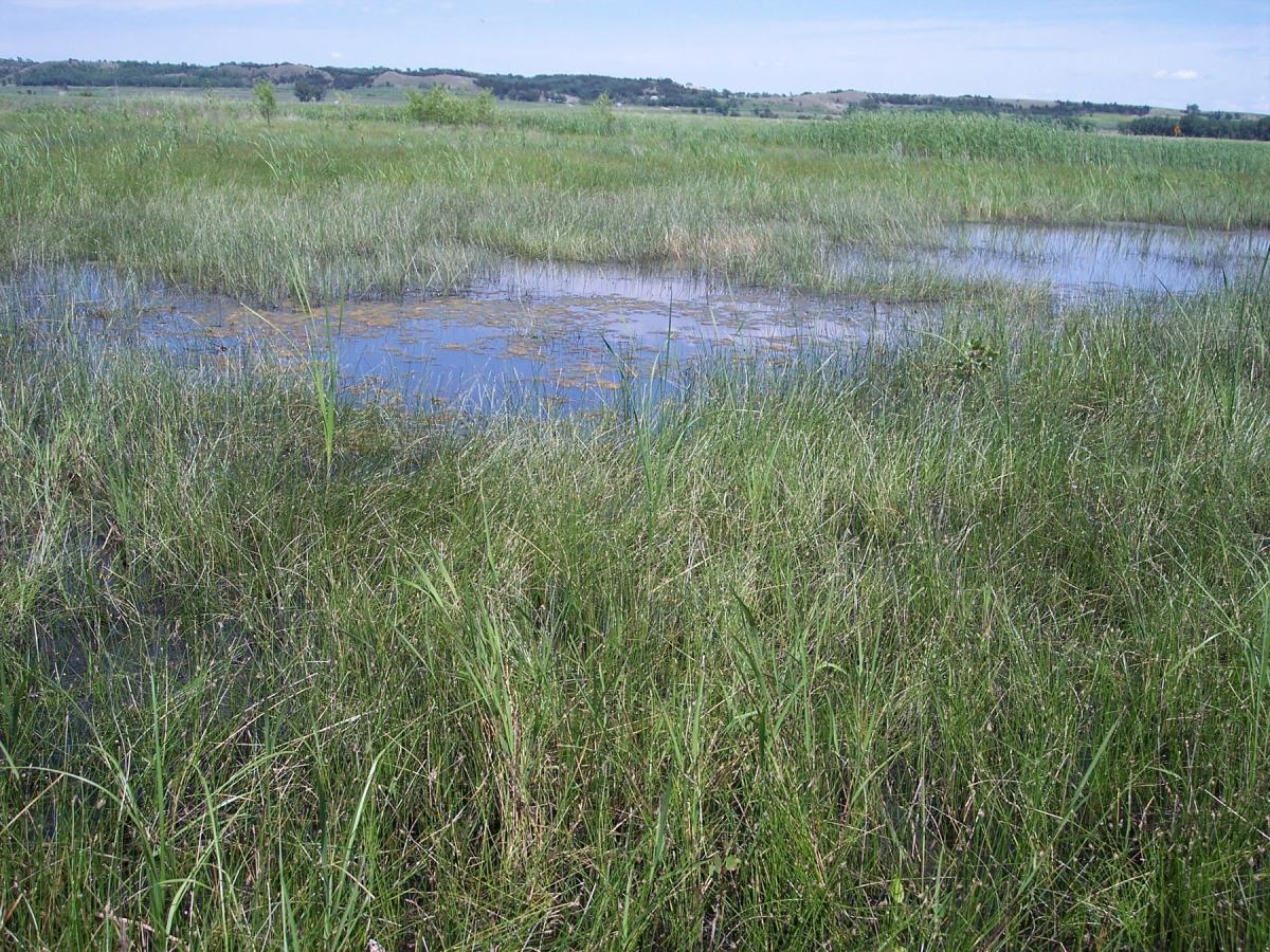 1800-Owego-wetland